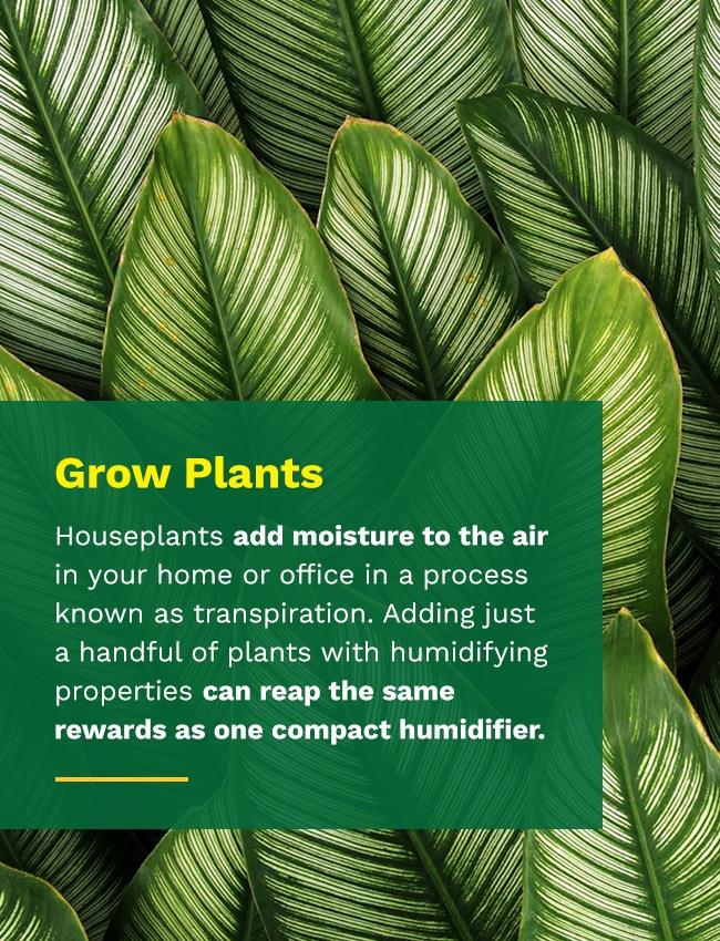 grow plants to save energy